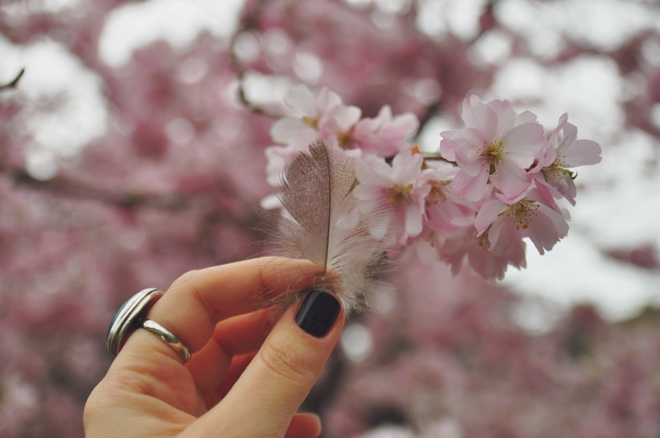 cherry_blossom_rose_feather_spiritual_moment